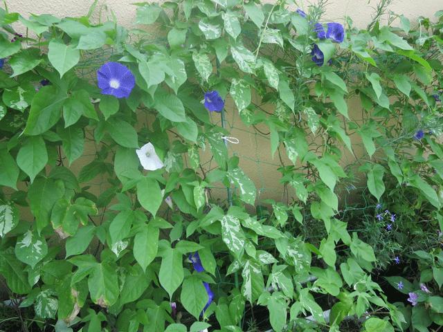 園庭のお手入れ1