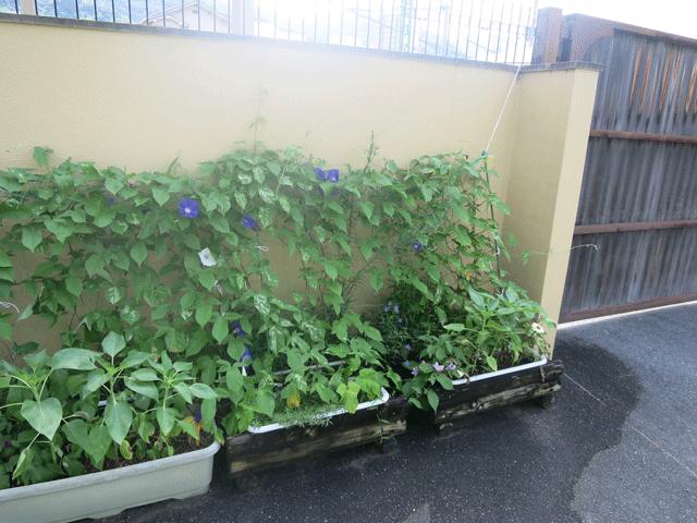 園庭のお手入れ2